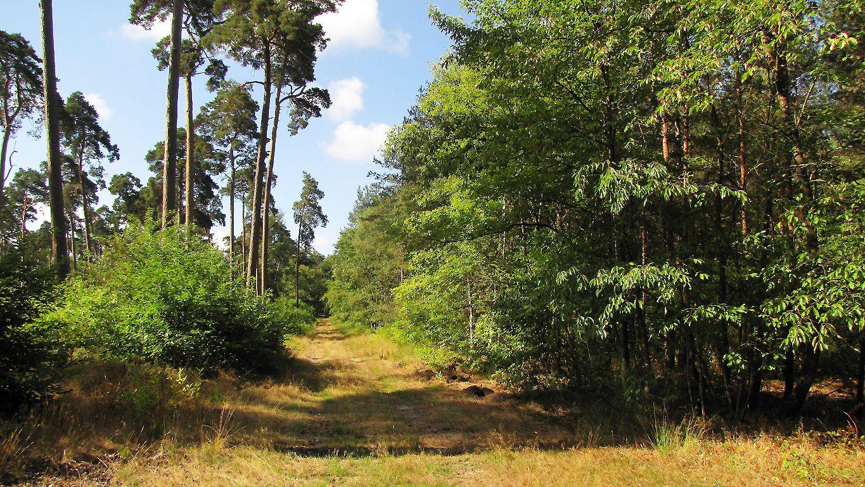 carrefour_Route du Parquet de Bois_Route de la Mare aux Canes
