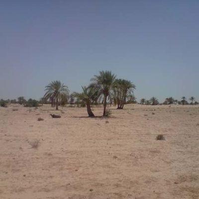 Un lot de terrain de 80000m² a sidi jmour (chik yahya) mellita houmt souk Djerba