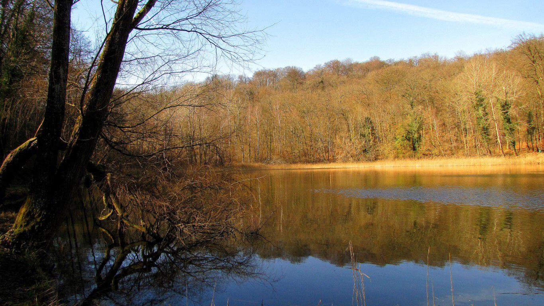 l'étang de Neuffontaines
