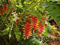 Beautés tropicales