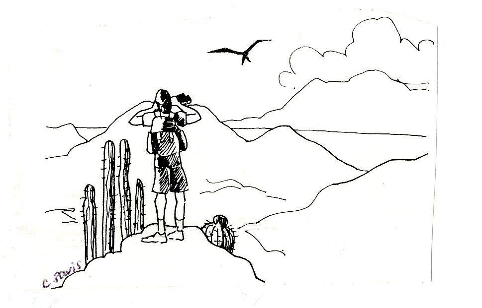 Album - Oiseaux des Antilles