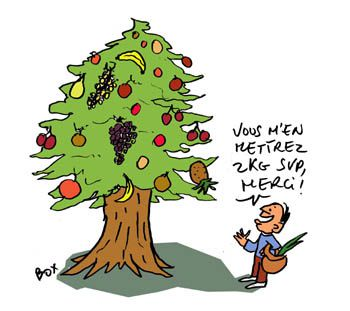 Arbres écologie arboriculture les arbres ont ils des fruits ?