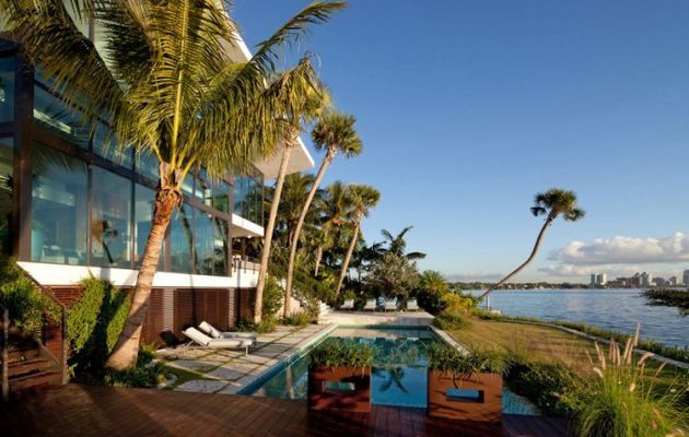 Coconut tree at home - why not?