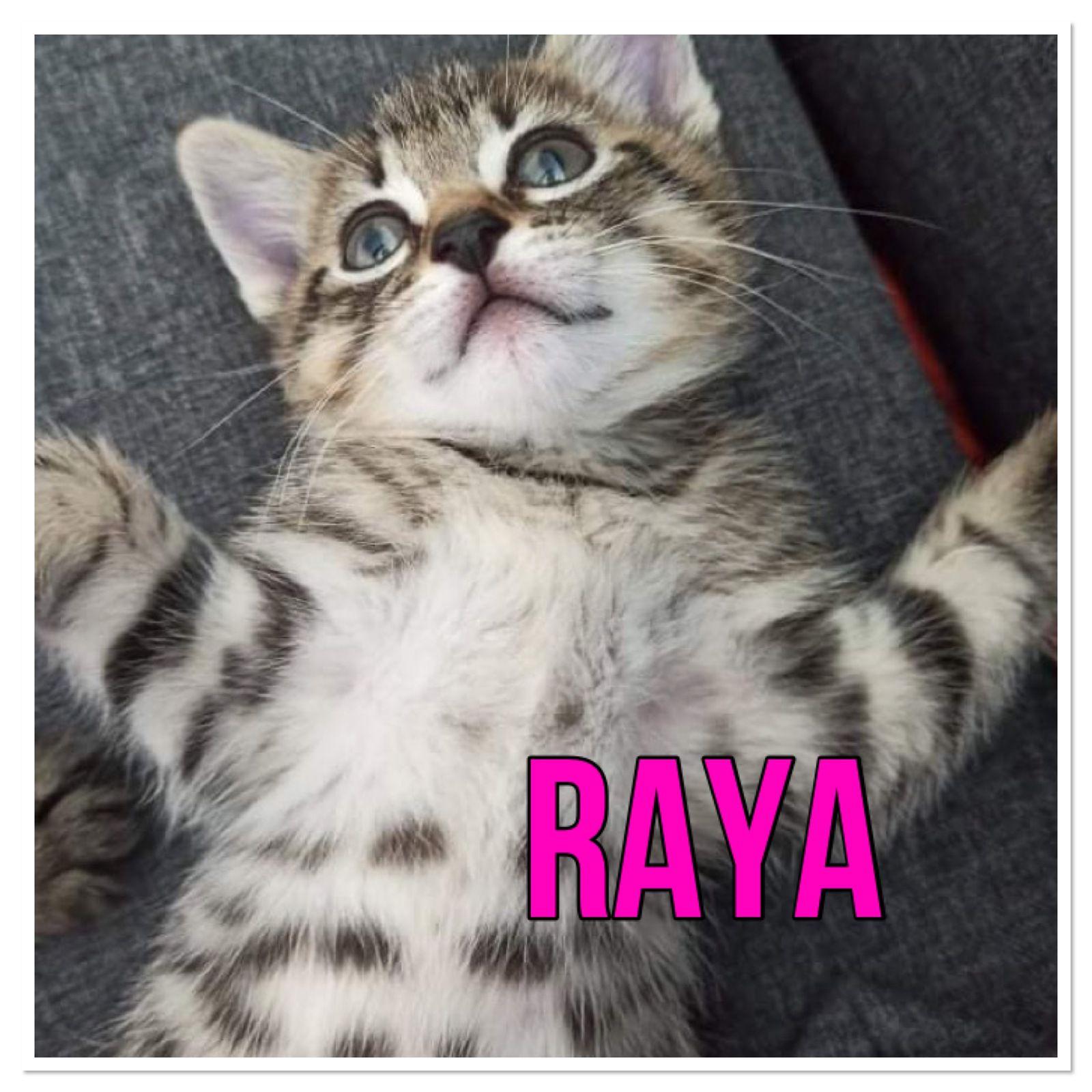 Raya adoptée