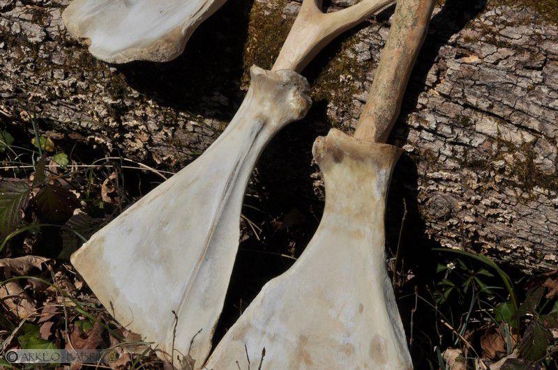Pelles en omoplates de bœufs, diverses hypothèses d'emmanchement.