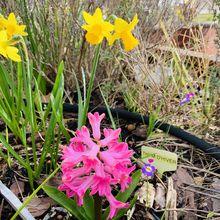 Les fleurs du mois de mars 2020, dans le micro jardin urbain