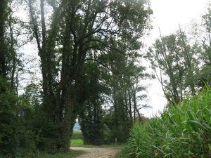 """Rando Santé """"Les Berges du Rhône"""" à Yenne"""