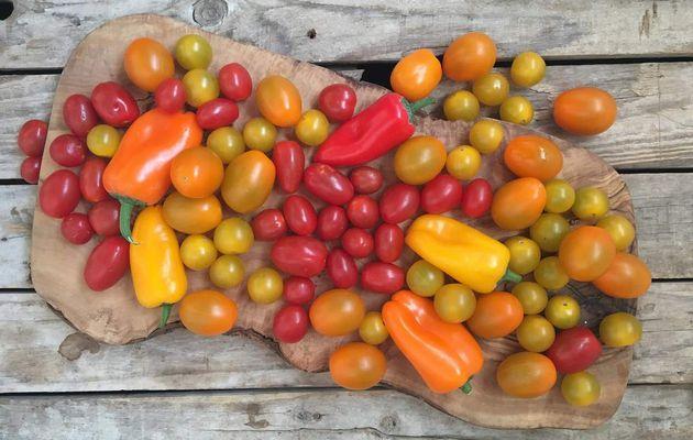 Salade tomate mozzerella