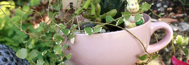 Composer un mini jardin le DIY  pour green addict !!