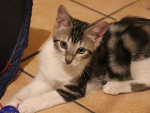 SAMY chaton mâle 4 mois né le 3 mai 2021- collier 010955