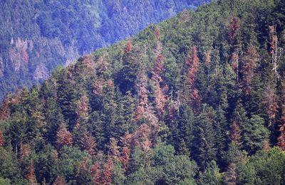Environnement : la France va planter 50 millions d'arbres pour repeupler ses forêts