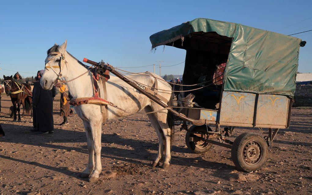 """""""Le petit cheval dans le mauvais temps, qu'il avait donc du courage ! ... C'était un p'tit cheval blanc, tous derrière et lui devant...Mais toujours il était content, menant les gars du village"""" ( Paul Fort )."""
