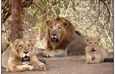 Celebrate wild world day in India with us