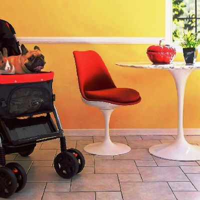 Get the Best Pet Stroller for Your Furry Friend