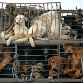 Petition the Chinese government to stop the Yulin dog eating festival and pass animal welfare laws.