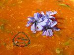 Soupe tomates, parmesan, cresson alénois, basilic, fleurs de chicorée