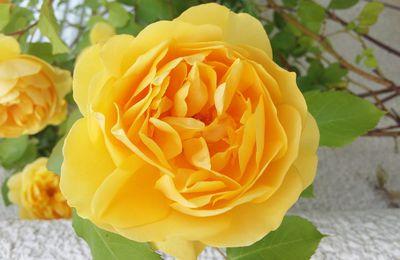 Des roses ❤❤❤