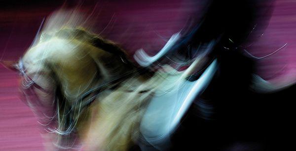 Le cheval à l'honneur en Avignon