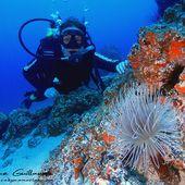 Humour Plongée sous-marine: En apnée à -15 mètres - Doc de Haguenau