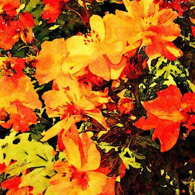 Les Pigments Oranges pour l'Aquarelle
