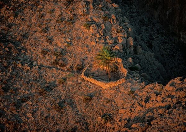 Art Photography by Yann ARTHUS-BERTRAND, Palm trees in the mountains of the musandam peninsula, Oman. The limestone mountains that dominate the Sultanate of Oman are actually emerged sea floors consequence of the contact between the Arabian Peninsula and the Eurasian plate during major tectonic movements.