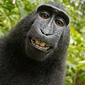 Le macaque nègre - Résonance ou vanité