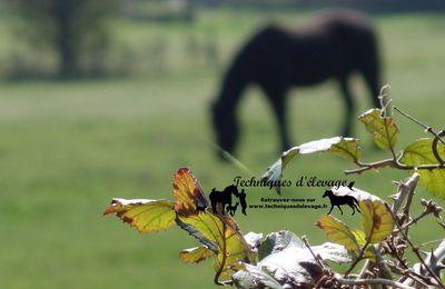 Petits strongles chez le cheval : protégeons les adultes !