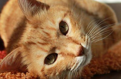 Pau : dans le congélateur, 15 chats morts