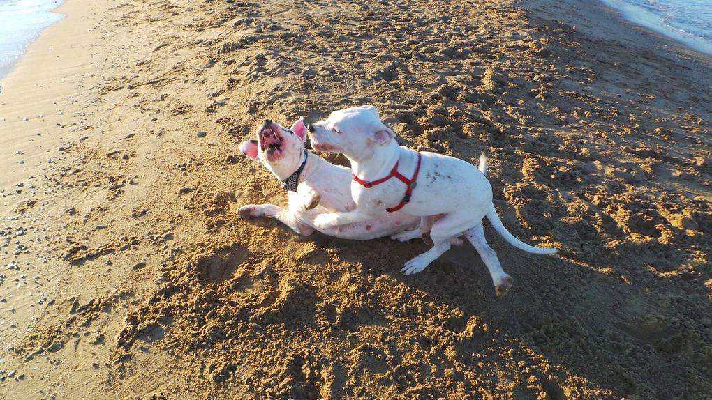 Vacances avec mes dogos