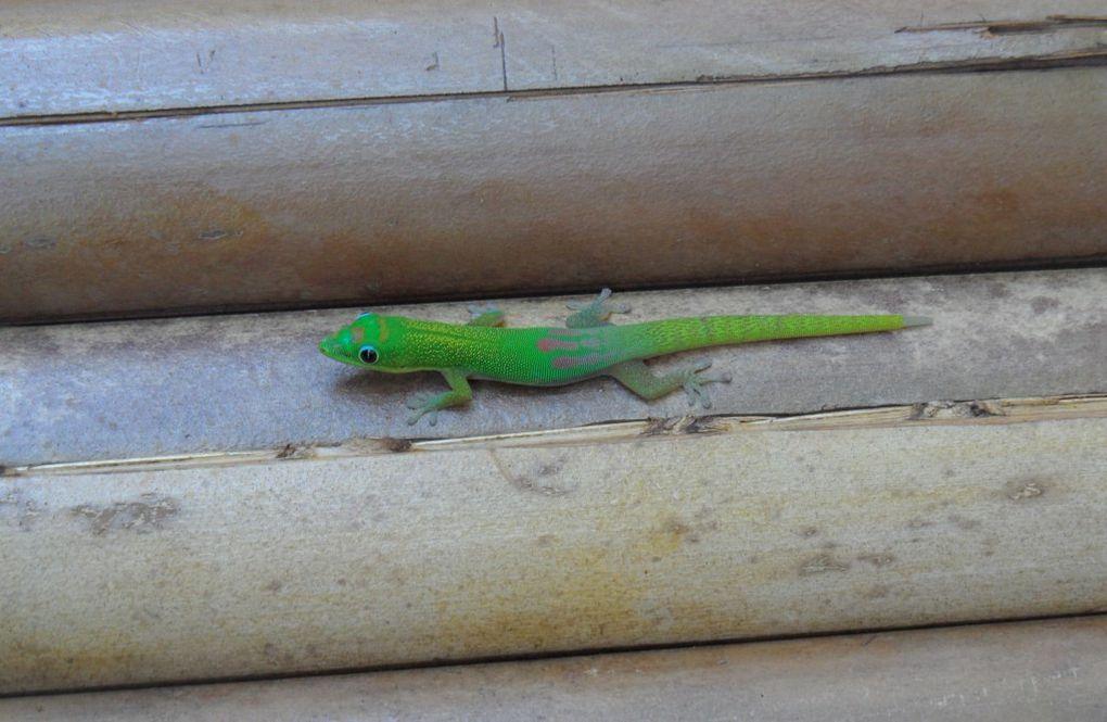 Album - 2013-07-28-Madagascar