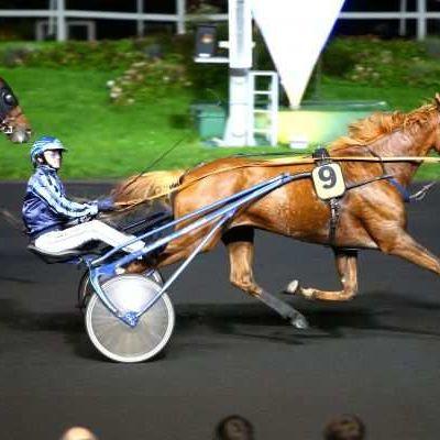 Quinté Lundi à Vincennes : Champion Doré, incontournable