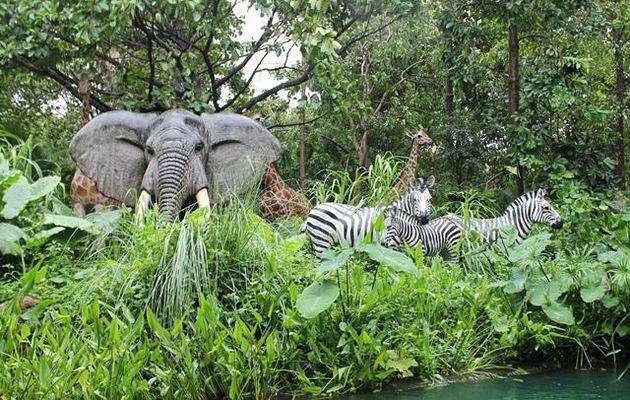 RT @Urlaubsfreak: #Reise Tipp mit #Botswana in...