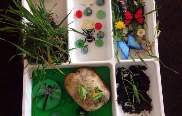 Mini-monde dans un tiroir à couverts : les insectes et petites bêtes