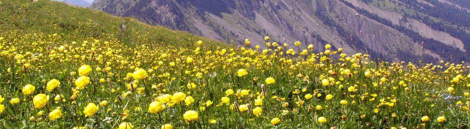 COL MARIAUD - flore et sommets - MAI en Haute Provence