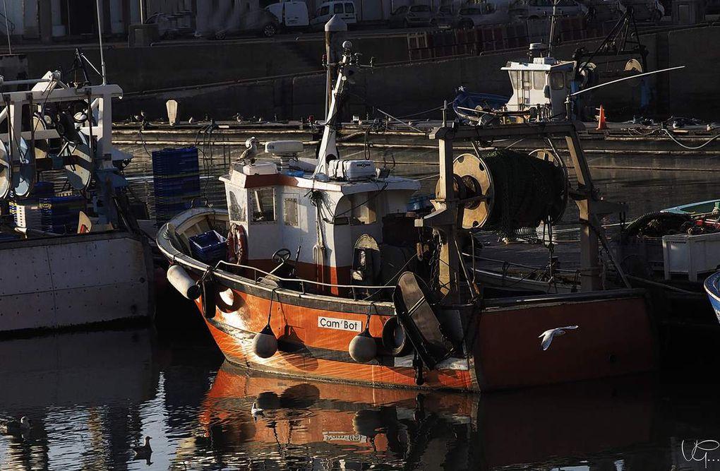 bateaux de pêche, goelands mouettes et tournepierres en plein vol. Le soleil sur La Turballe