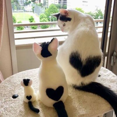 Images drôles ou mignonnes avec des chats