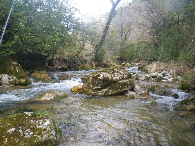 La rivière et les truites du matin.