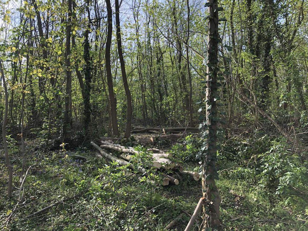 Marche Nordique en forêt de Meudon - 15,1 km.