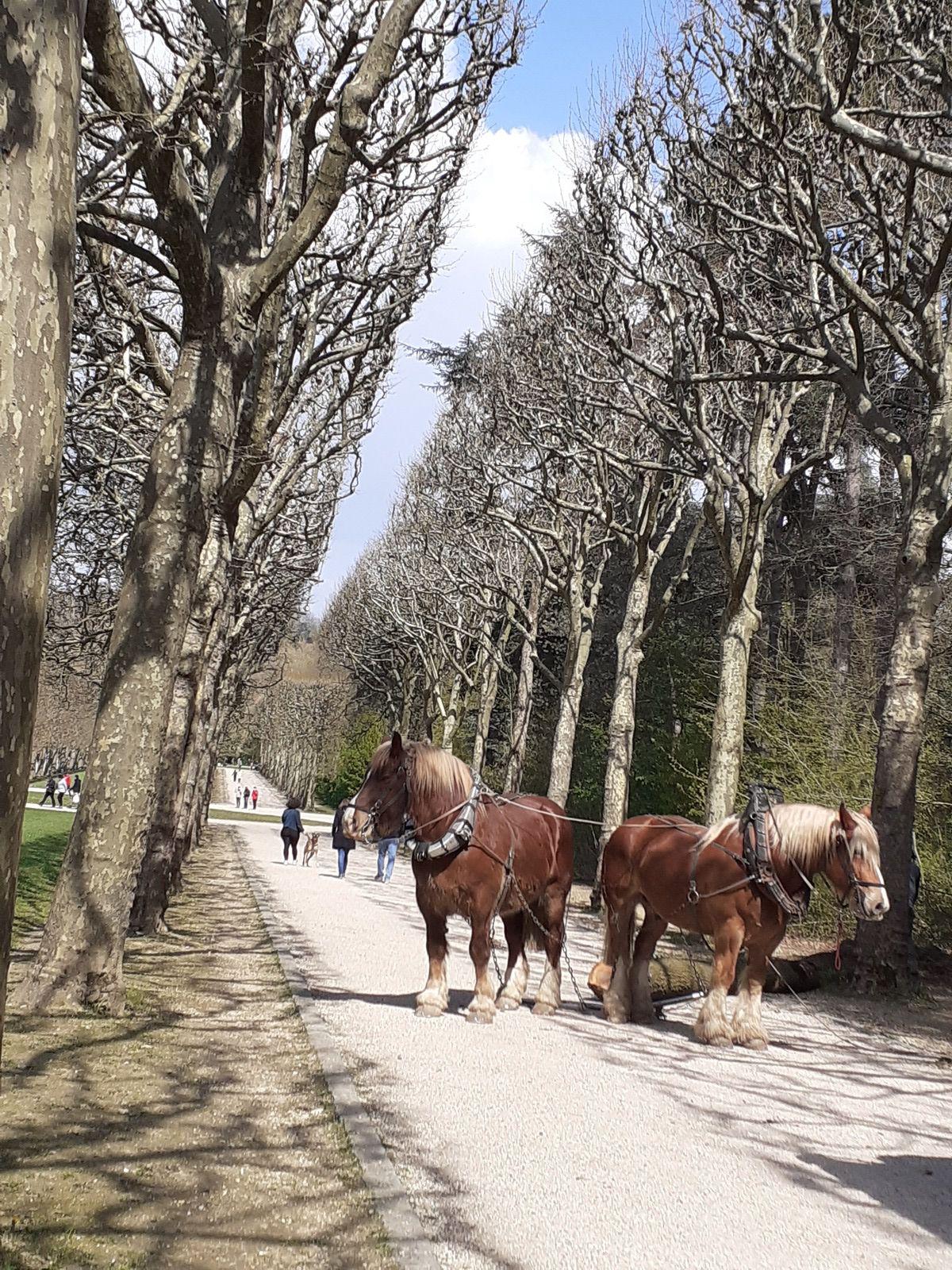 Chemin faisant, rencontre avec les chevaux et les bûcherons