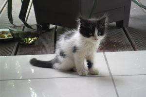 BLACK and WHITE - adoptés