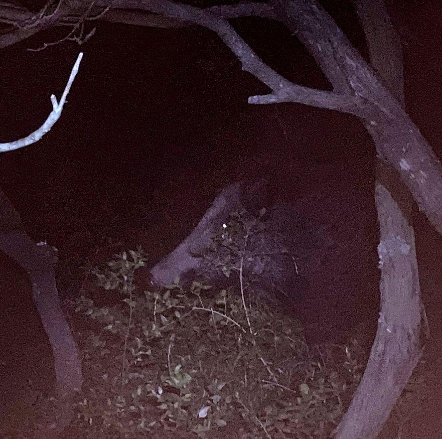 Visite du soir sous la terrasse
