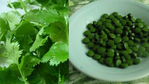 El cilantro y la chlorella pueden eliminar el 91% del mercurio del cuerpo dentro de los 42 días