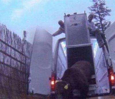 Pyrénées : la capture de l'ours Goiat autorisée par le préfet du 65 pour l'équiper d'un collier GPS