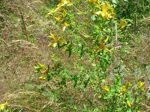 A la découverte de quelques plantes sauvages