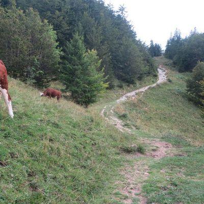27 août etape 1 de Thonon au Col du Feu 25 km