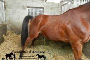 Comment choisir le drainant naturel pour mon cheval? 2-Les plantes drainantes