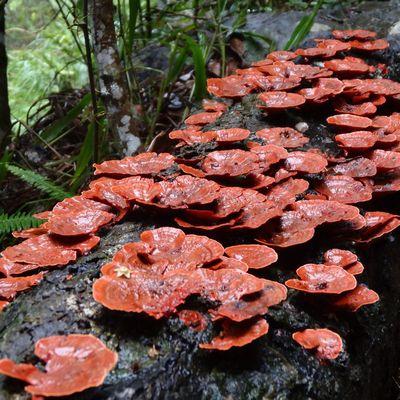 Australie -Episode 6 (déjà !!)-  La forêt pluviale du Queensland… Et la pluie !!