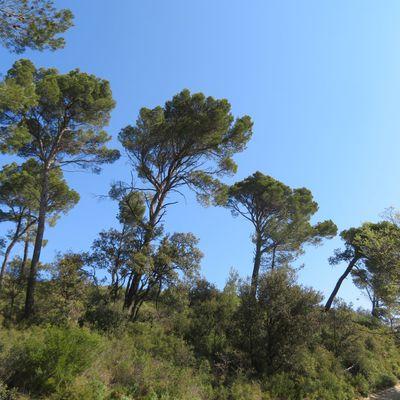 Quelques arbres et arbustes autour de chez moi / Balade en Provence