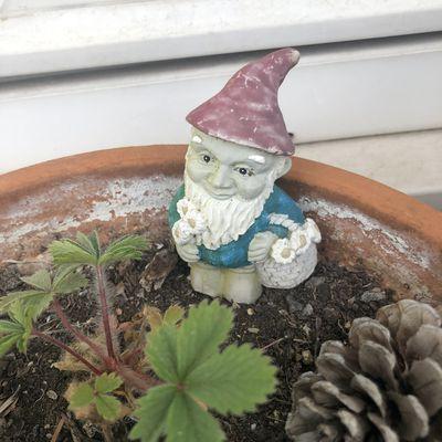 Alerte rouge : le blocage du canal de Suez provoque une pénurie de nains de jardin chez nos voisins anglais : que fait Boris Johnson ?