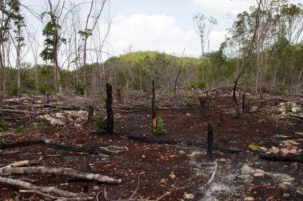 Déforestation : 3,9 millions d'hectares perdus en 10 ans en Afrique, pire bilan au monde
